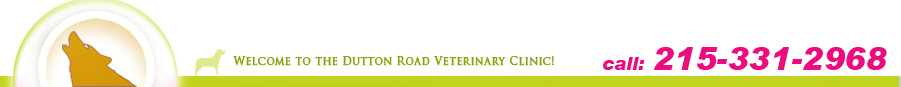 NGAP Pet Care. Pet Clinic / kennel